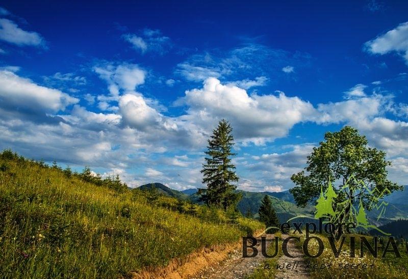Bucovina road