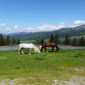 Horses in Bucovina